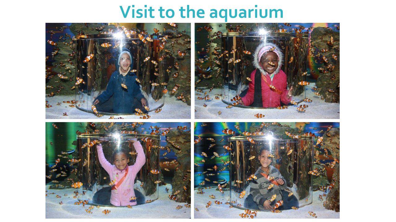 Visit to the aquarium