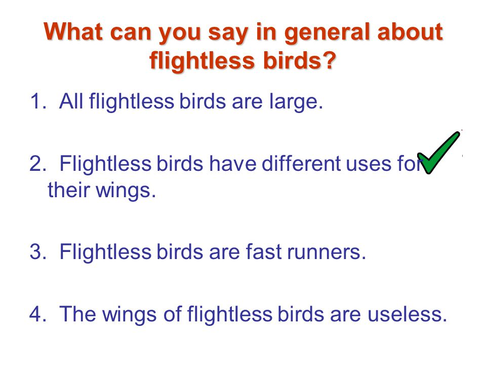What can you say in general about flightless birds.