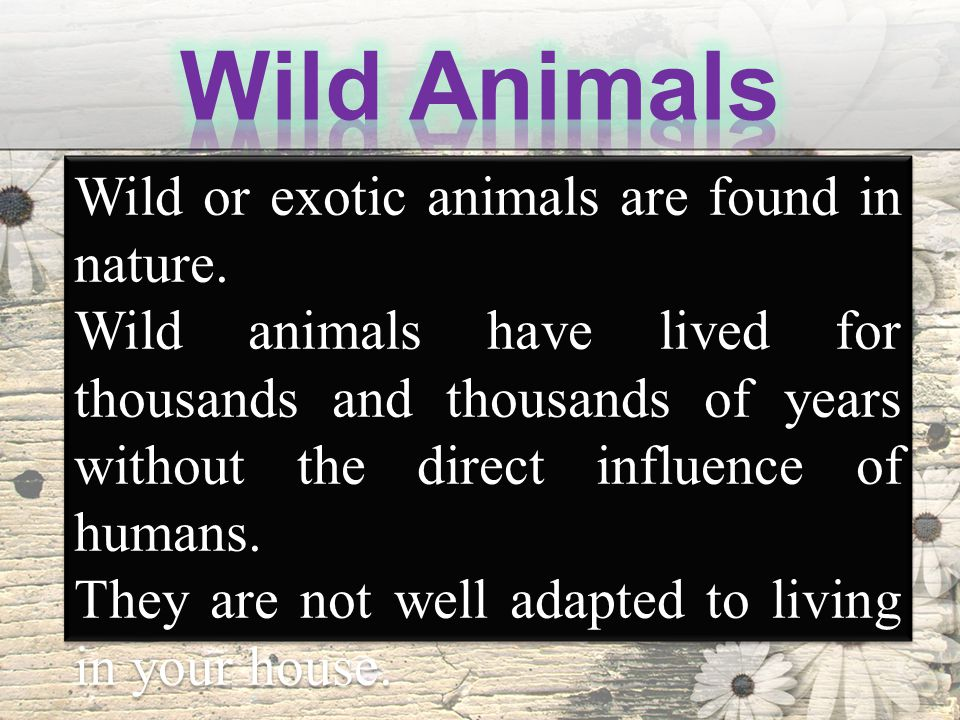 Wild or exotic animals are found in nature.