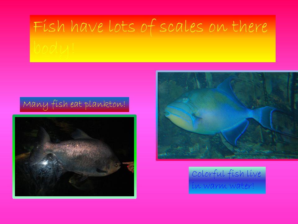 Scuba Divers clean the tanks.Scuba Divers search for sharks.