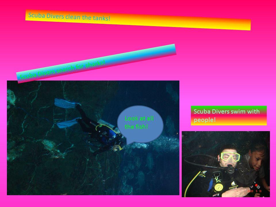 Scuba Divers clean the tanks. Scuba Divers search for sharks.