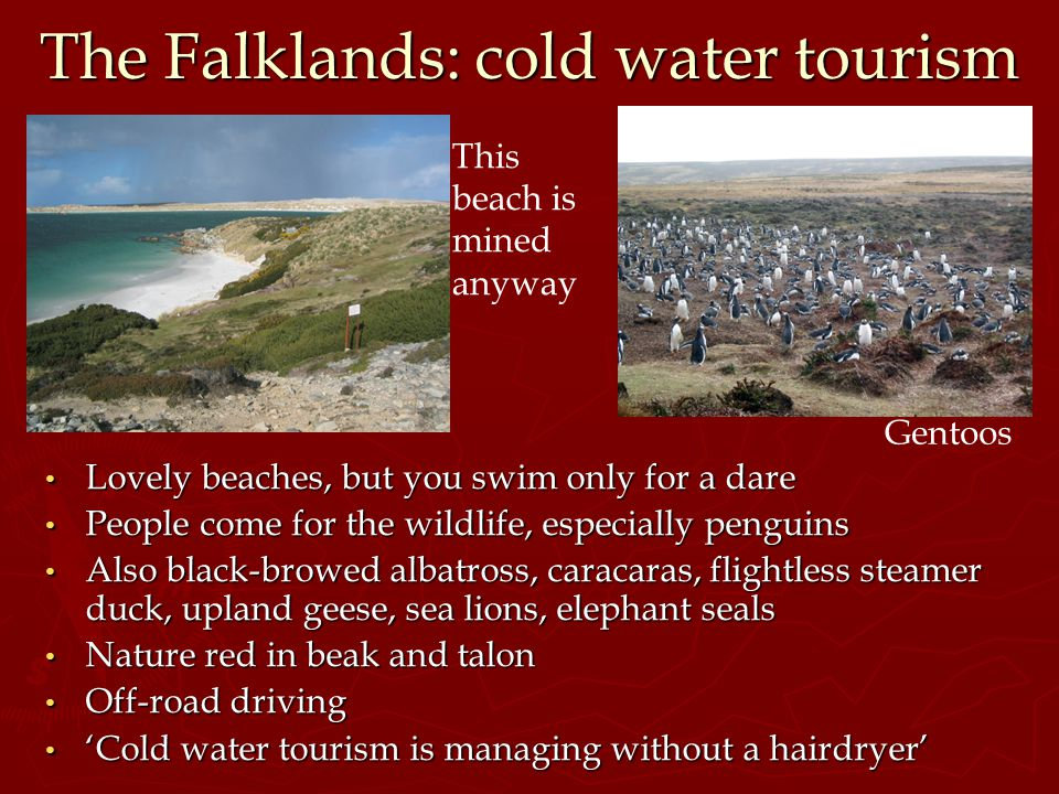 The Falklands: cold water tourism Lovely beaches, but you swim only for a dare People come for the wildlife, especially penguins Also black-browed alb