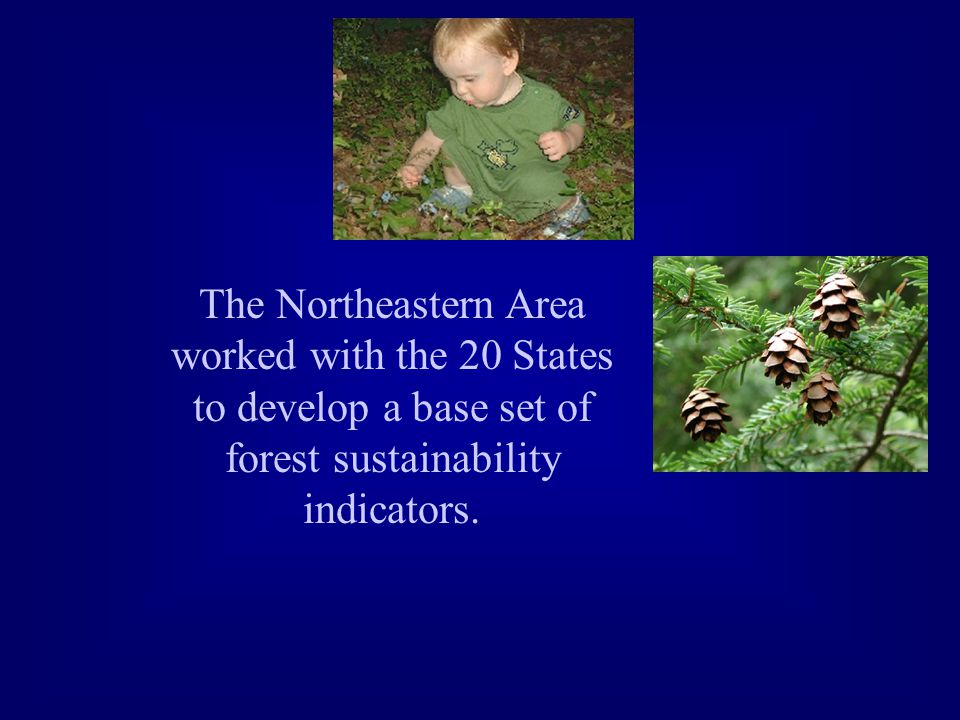 The Northeastern Area worked with the 20 States to develop a base set of forest sustainability indicators.