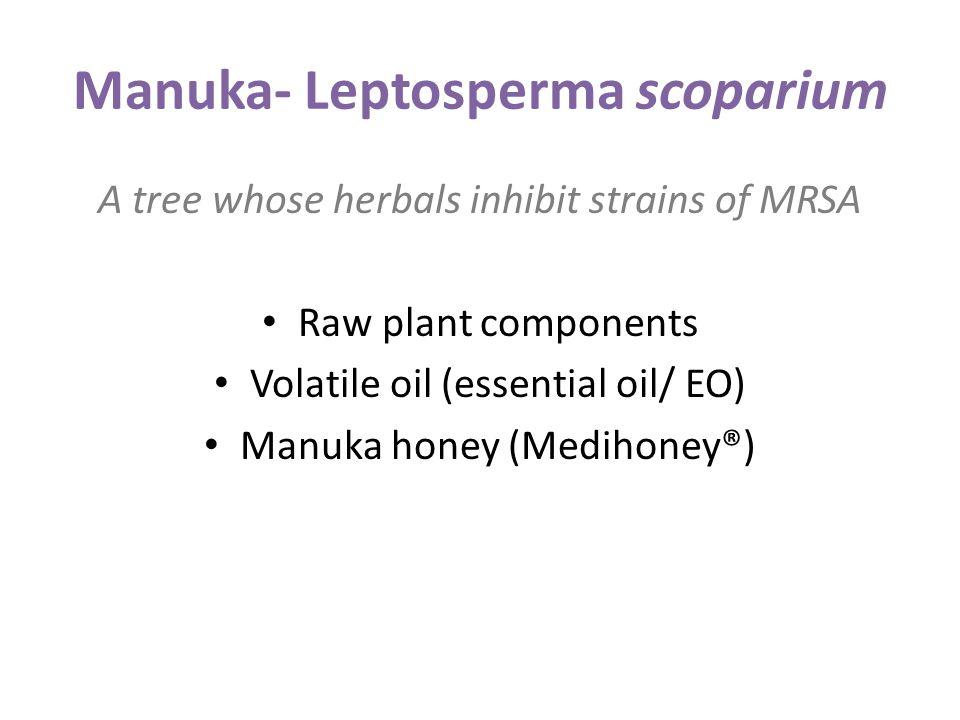 Manuka- Leptosperma scoparium A tree whose herbals inhibit strains of MRSA Raw plant components Volatile oil (essential oil/ EO) Manuka honey (Medihoney®)