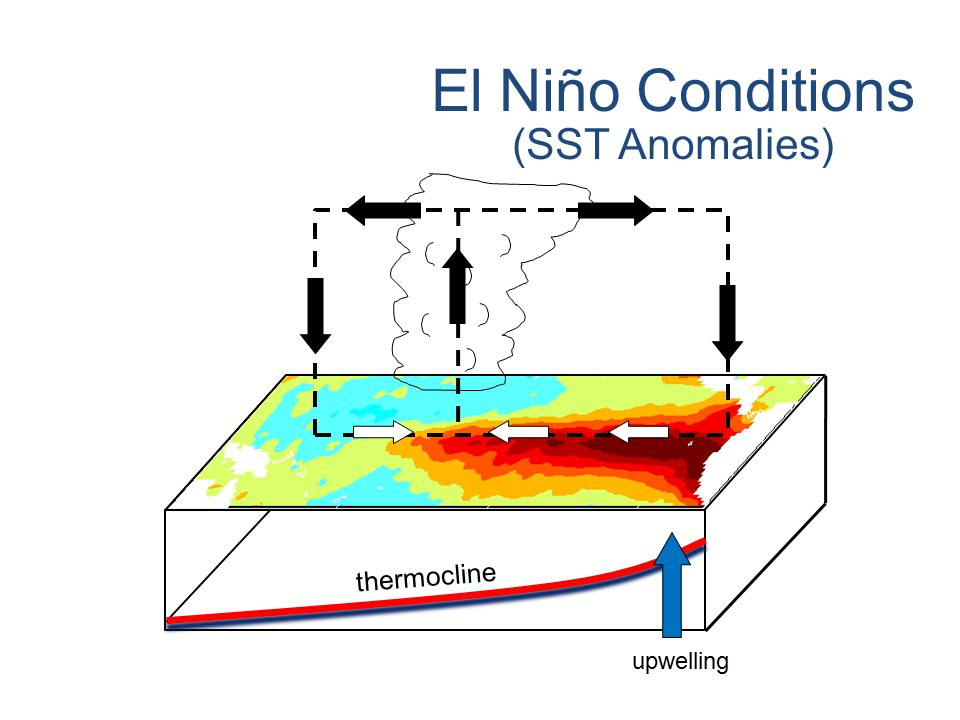 © Crown copyright Met Office El Niño Conditions (SST Anomalies) thermocline upwelling