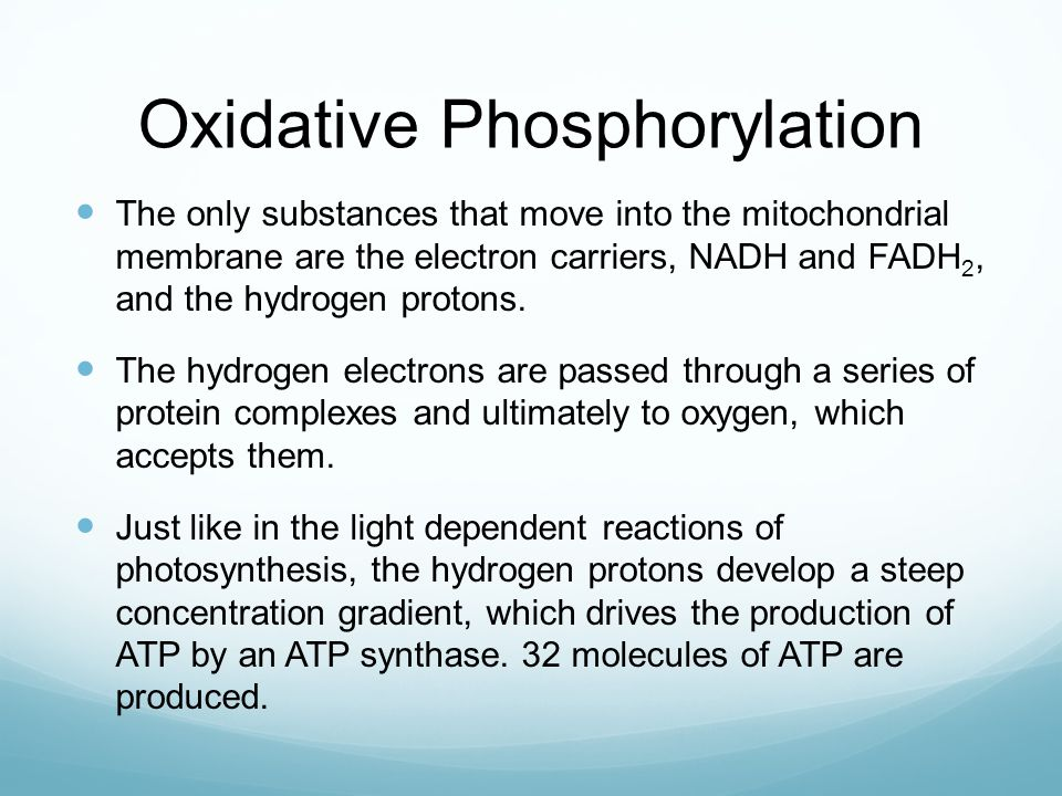 Oxidative Phosphorylation The only substances that move into the mitochondrial membrane are the electron carriers, NADH and FADH 2, and the hydrogen p
