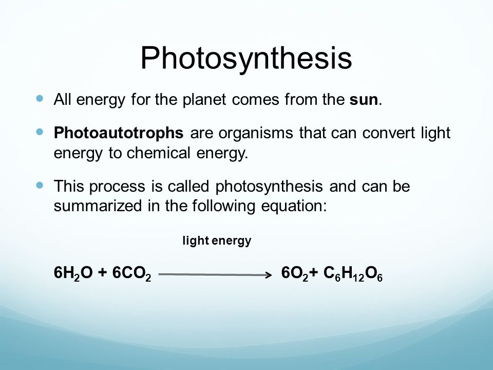 Photosynthesis All energy for the planet comes from the sun. Photoautotrophs are organisms that can convert light energy to chemical energy. This proc