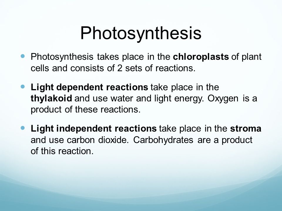 Photosynthesis Photosynthesis takes place in the chloroplasts of plant cells and consists of 2 sets of reactions. Light dependent reactions take place
