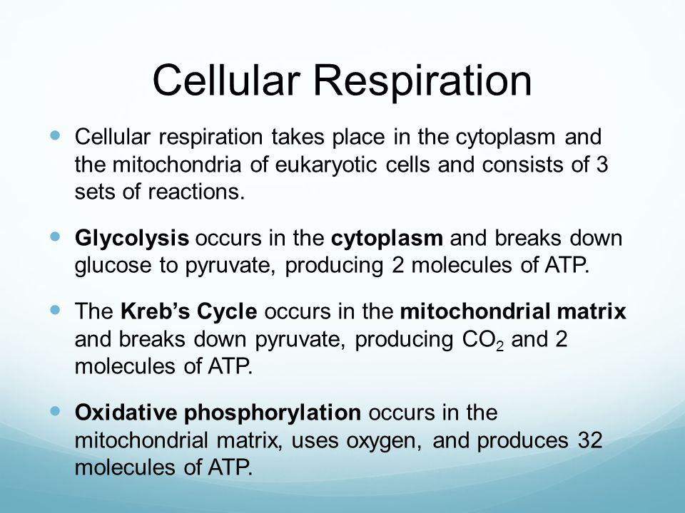 Cellular Respiration Cellular respiration takes place in the cytoplasm and the mitochondria of eukaryotic cells and consists of 3 sets of reactions. G