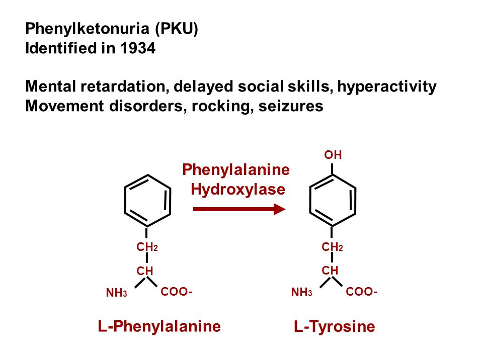 Altered function Smaller, fewer neurons Mutation in phenylalanine hydroxylase Diet GeneCell (neuron)Brain Altered behavior Person