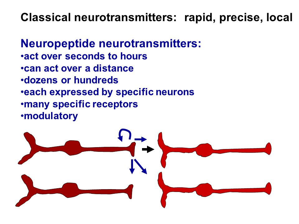 Classical neurotransmitters: rapid, precise, local Neuropeptide neurotransmitters: act over seconds to hours can act over a distance dozens or hundred