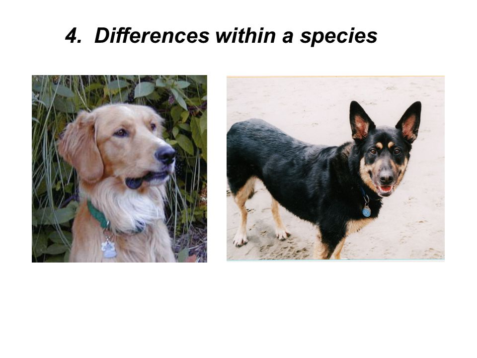 4. Differences within a species