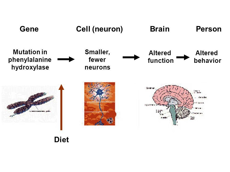Caspi et al., 2003 Science 301:386 Genetic sensitivity to the environment: Serotonin reuptake transporter genotype and traumatic events interact in human depressive illness