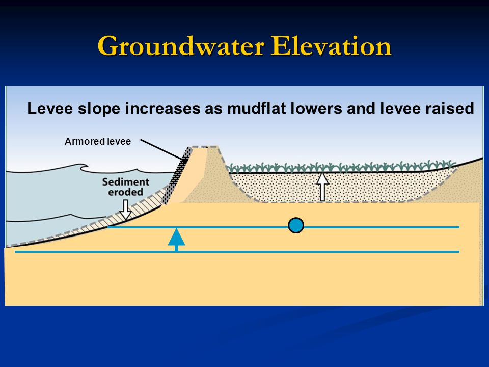 Groundwater Elevation Armored levee Levee slope increases as mudflat lowers and levee raised