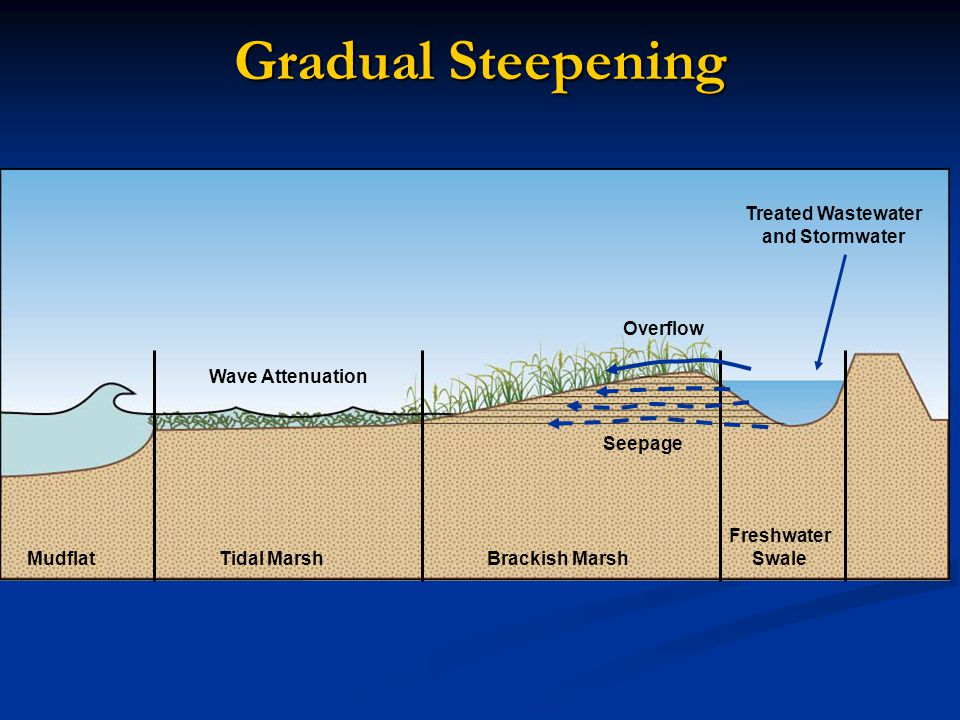 Gradual Steepening Rapid landward movement increases as sea level rises MudflatTidal MarshBrackish Marsh Freshwater Swale Treated Wastewater and Stormwater Seepage Overflow Wave Attenuation