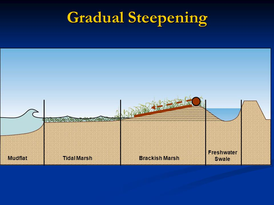 Gradual Steepening Rapid landward movement increases as sea level rises MudflatTidal MarshBrackish Marsh Freshwater Swale