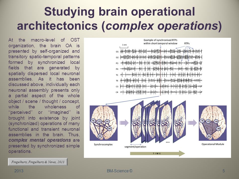 Studying brain operational architectonics (complex operations) 2013BM-Science ©5 At the macro-level of OST organization, the brain OA is presented by