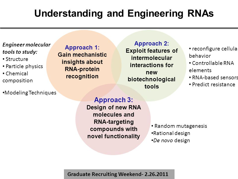Graduate Recruiting Weekend- 2.26.2011 Understanding and Engineering RNAs Approach 1: Gain mechanistic insights about RNA-protein recognition Approach 3: Design of new RNA molecules and RNA-targeting compounds with novel functionality Approach 2: Exploit features of intermolecular interactions for new biotechnological tools Modeling Techniques Engineer molecular tools to study: Structure Particle physics Chemical composition reconfigure cellular behavior Controllable RNA elements RNA-based sensors Predict resistance Random mutagenesis Rational design De novo design