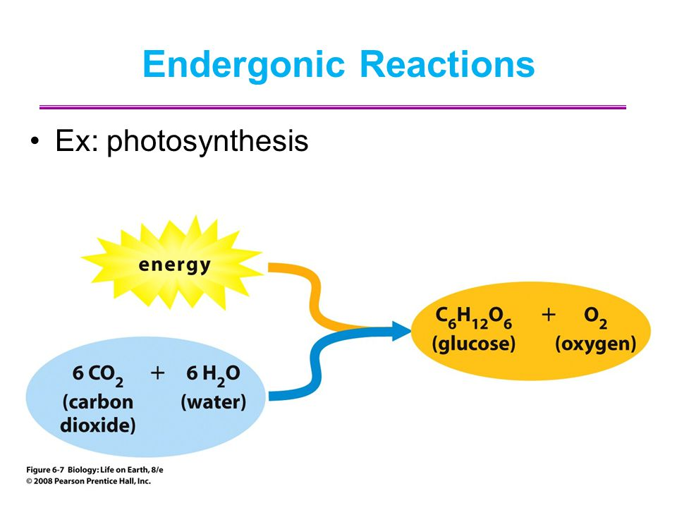 Endergonic Reactions Ex: photosynthesis