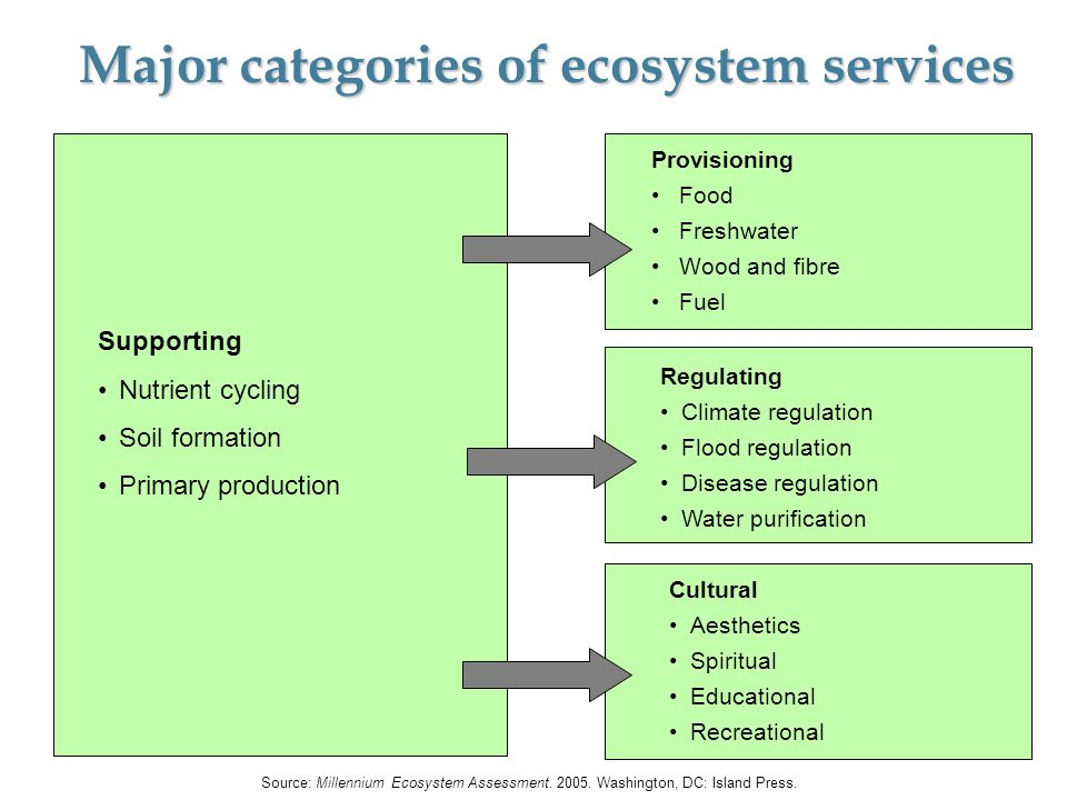 Supporting Nutrient cycling Soil formation Primary production Provisioning Food Freshwater Wood and fibre Fuel Regulating Climate regulation Flood reg