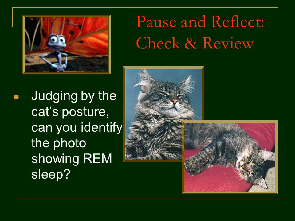 Pause and Reflect: Check & Review Judging by the cat's posture, can you identify the photo showing REM sleep?