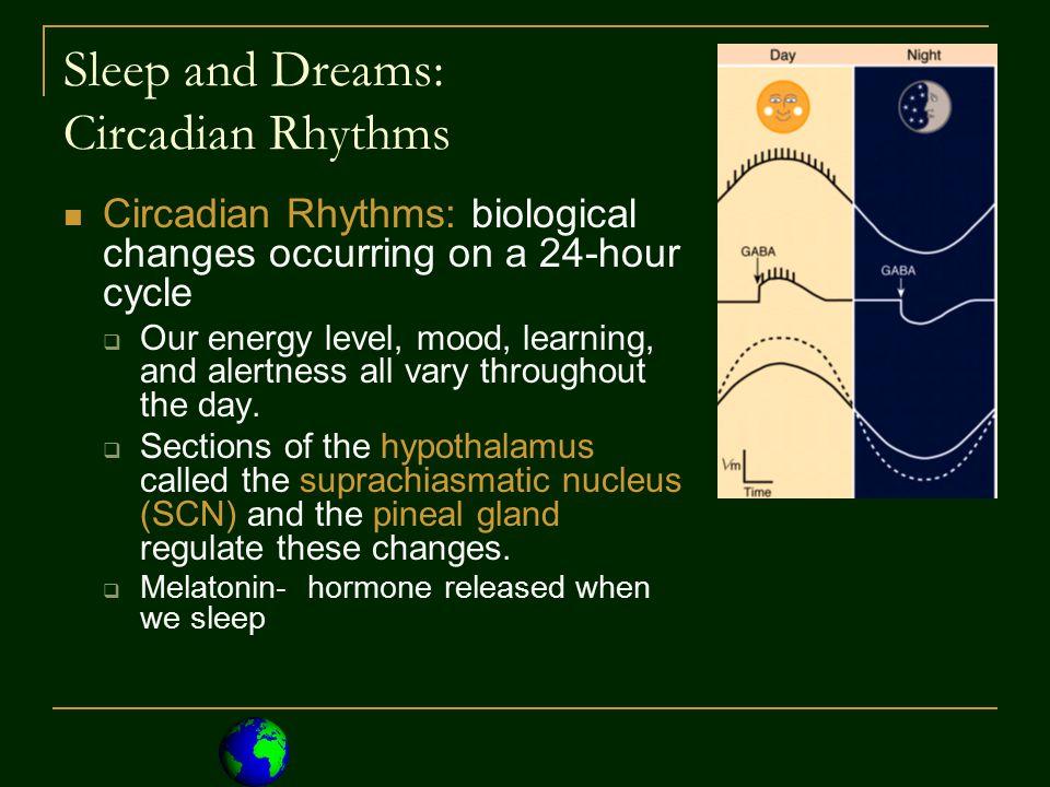 Psychoactive Drugs: Stimulants 2.