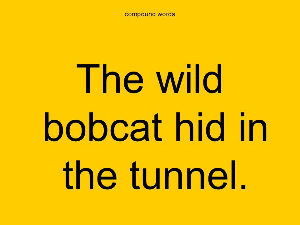 compound words The wild bobcat hid in the tunnel.