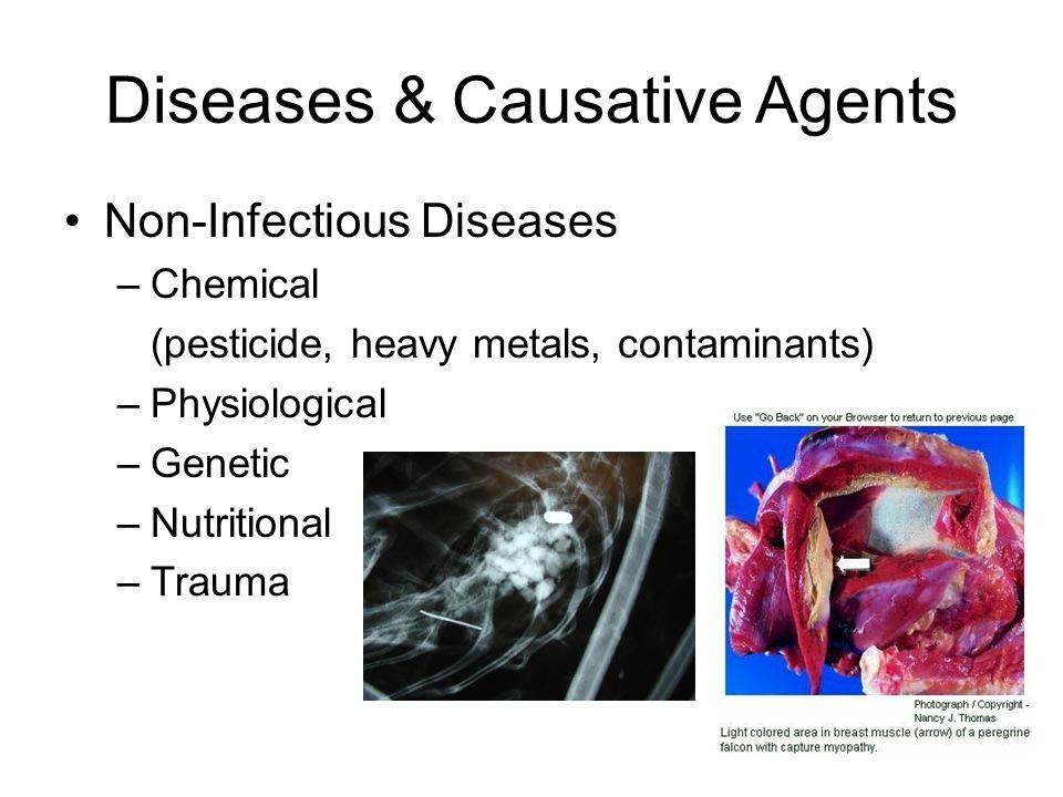 E A H Good Health In Balance A H Ex: Influenza Agent Increased A H Ex: Tularemia, Plague Host pop.