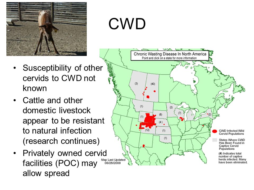CWD Susceptibility of other cervids to CWD not known Cattle and other domestic livestock appear to be resistant to natural infection (research continues) Privately owned cervid facilities (POC) may allow spread