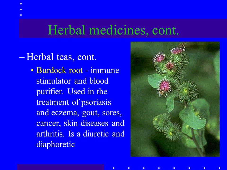 Herbal medicines, cont. –Herbal teas, cont. Burdock root - immune stimulator and blood purifier. Used in the treatment of psoriasis and eczema, gout,