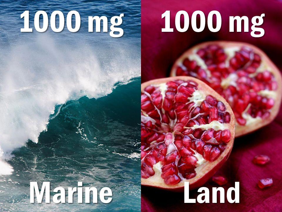 MarineLand 1000 mg