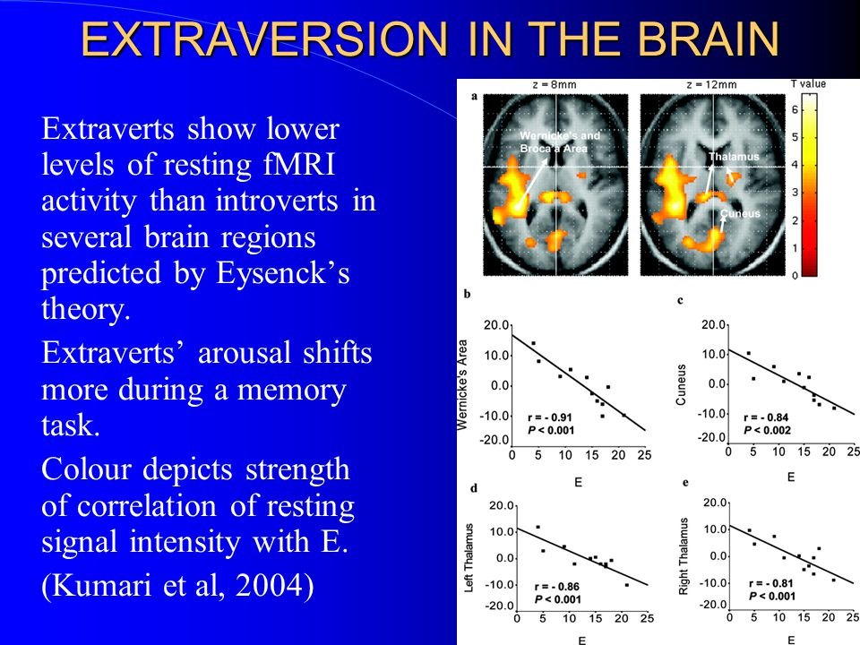 EXTRAVERSION IN THE BRAIN Extraverts show lower levels of resting fMRI activity than introverts in several brain regions predicted by Eysenck's theory.