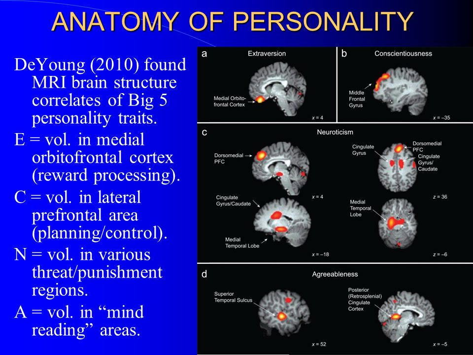ANATOMY OF PERSONALITY DeYoung (2010) found MRI brain structure correlates of Big 5 personality traits.