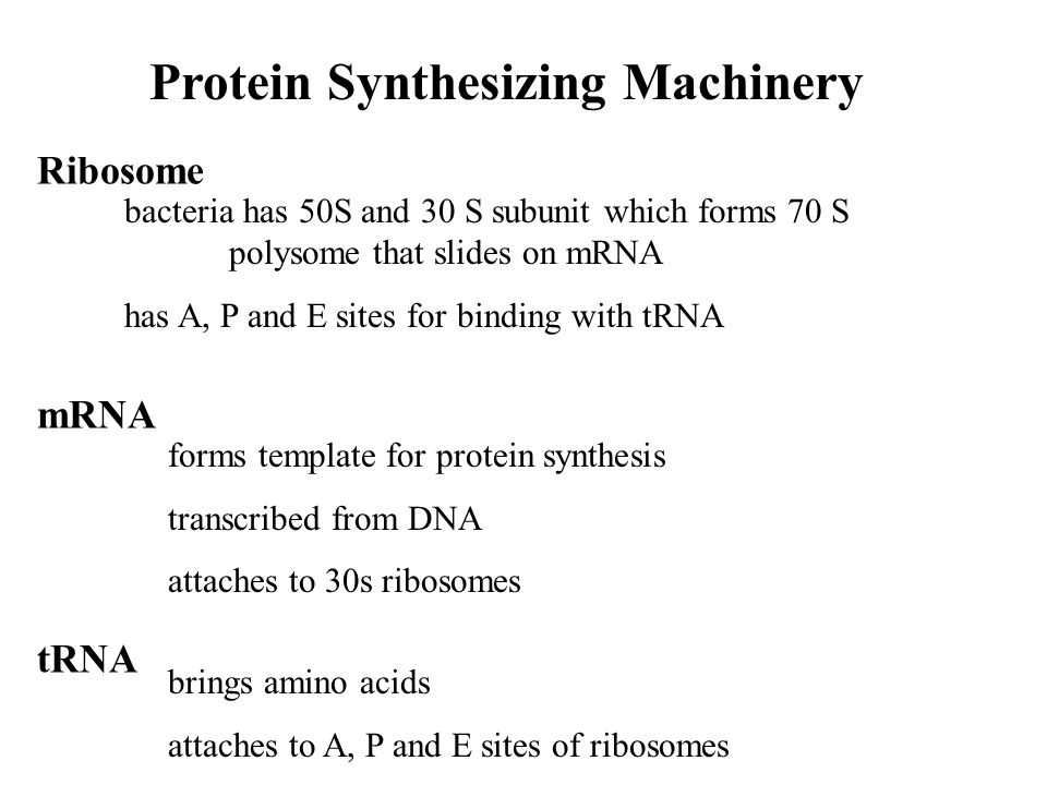Protein Synthesizing Machinery Ribosome mRNA tRNA bacteria has 50S and 30 S subunit which forms 70 S polysome that slides on mRNA has A, P and E sites