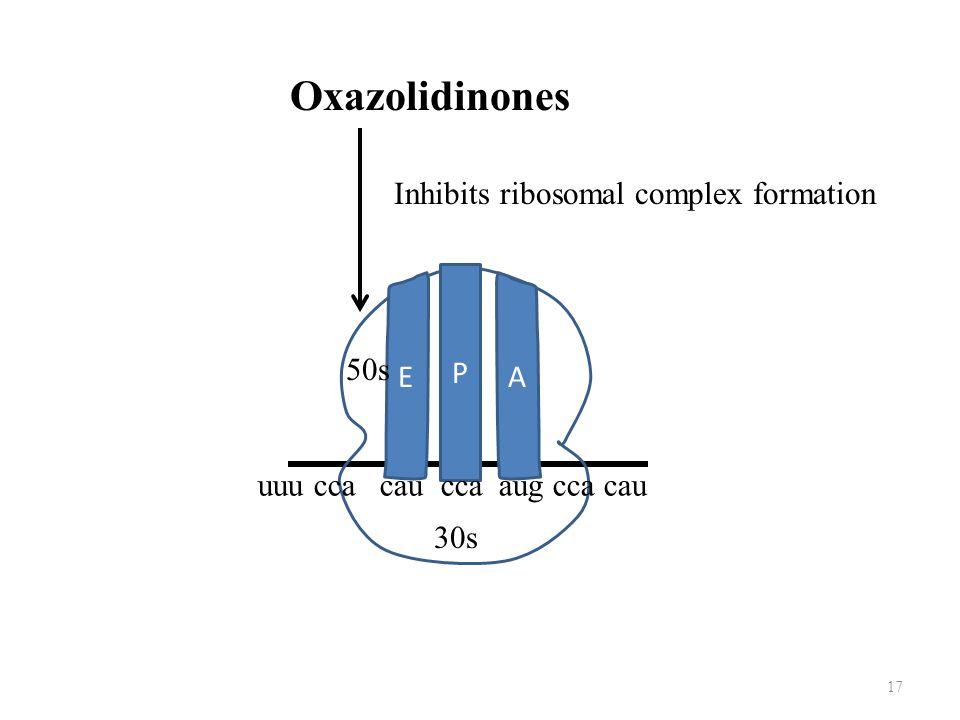 17 Oxazolidinones E A P uuu cca cau cca aug cca cau 30s 50s Inhibits ribosomal complex formation