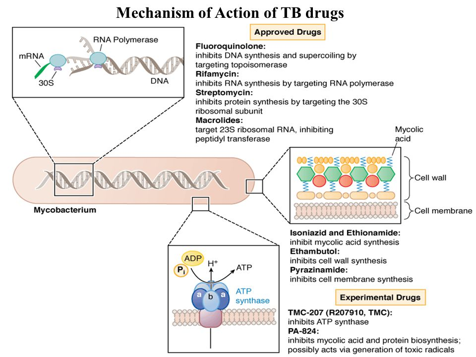 24 Mechanism of Action of TB drugs