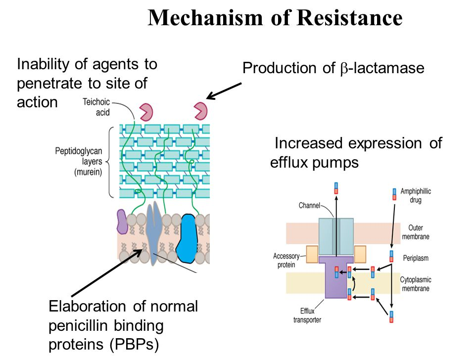 Mechanisms of Resistance Intracellular penetration Modification of the ribosomal binding site (Tet) Low affinity of drug for bacterial ribosomes acetylation, phosphorylation, adenylation of OH or NH2 gr (Macrolides, AG) Drug inactivation Metabolites can also compete with the drugs (Mac, AG) Efflux pumps (Tet, Mac) pH Anaerobic conditions (AG)