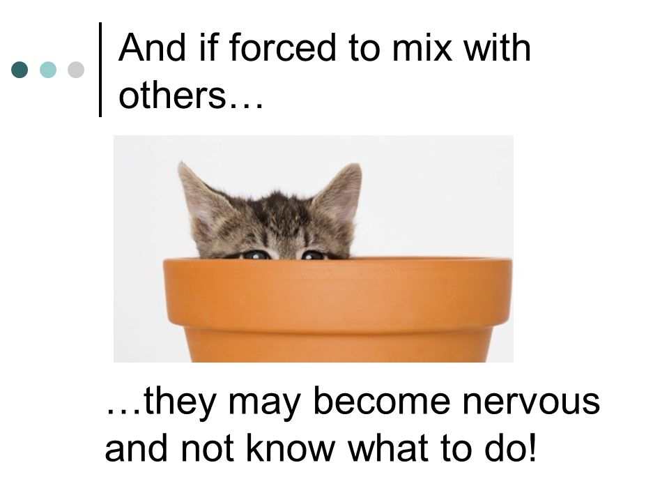And if forced to mix with others… …they may become nervous and not know what to do!