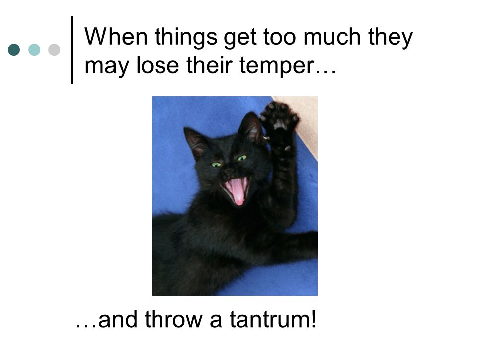 When things get too much they may lose their temper… …and throw a tantrum!