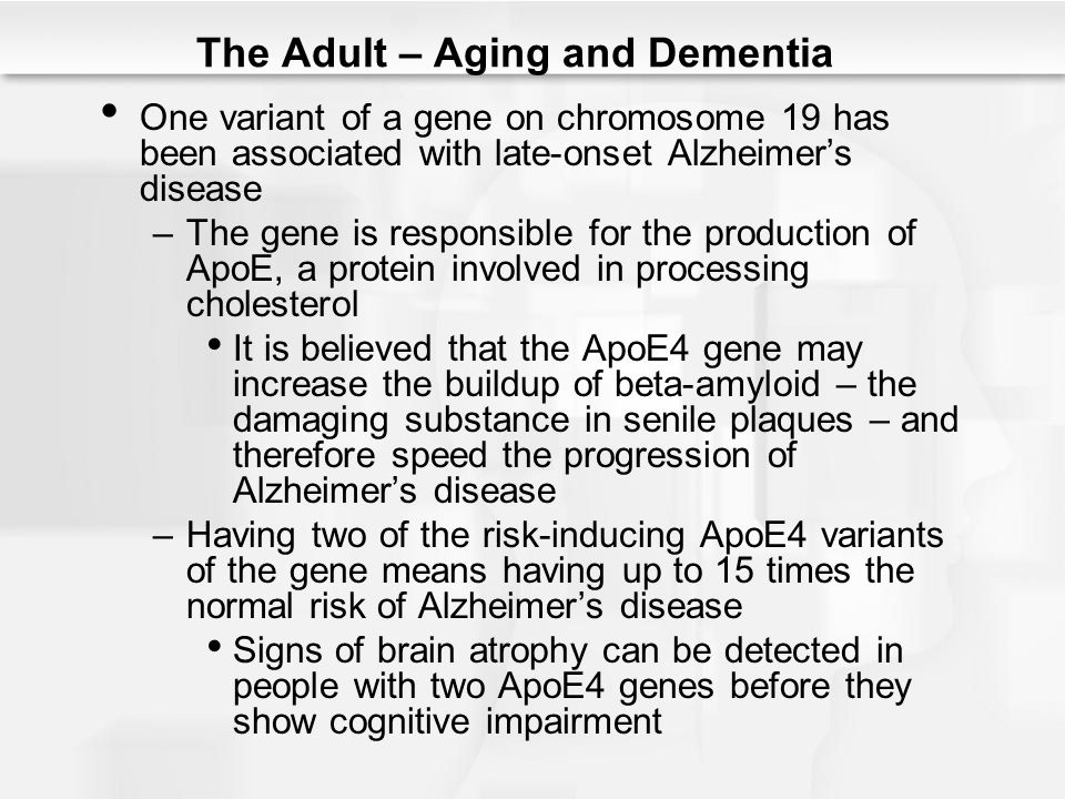 The Adult – Aging and Dementia One variant of a gene on chromosome 19 has been associated with late-onset Alzheimer's disease –The gene is responsible