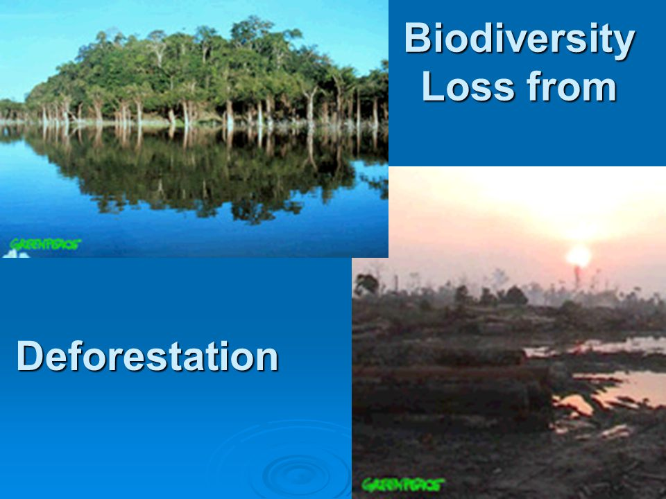 Deforestation Biodiversity Loss from
