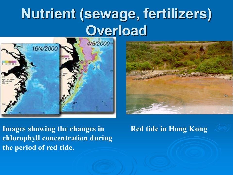 Nutrient (sewage, fertilizers) Overload Images showing the changes in chlorophyll concentration during the period of red tide.