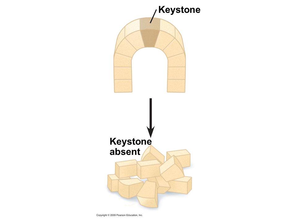 Keystone absent