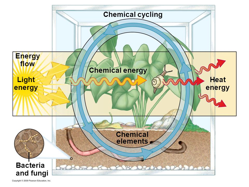 Energy flow Light energy Chemical energy Chemical elements Heat energy Bacteria and fungi Chemical cycling
