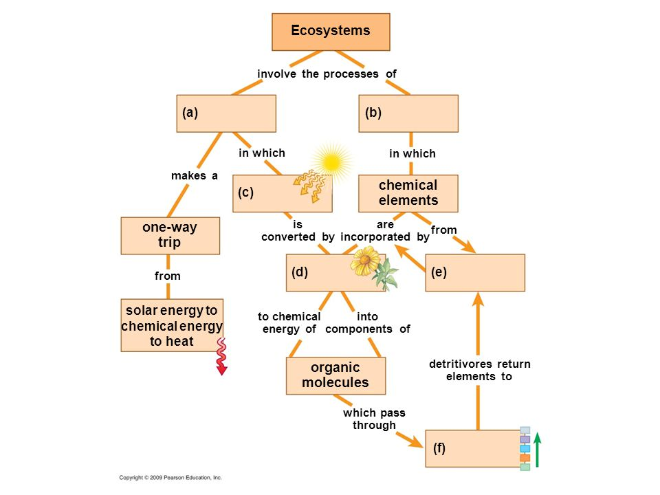 chemical elements Ecosystems involve the processes of in which makes a from are incorporated by is converted by to chemical energy of into components of detritivores return elements to which pass through one-way trip solar energy to chemical energy to heat organic molecules (a)(b) (c) (d)(e) (f)