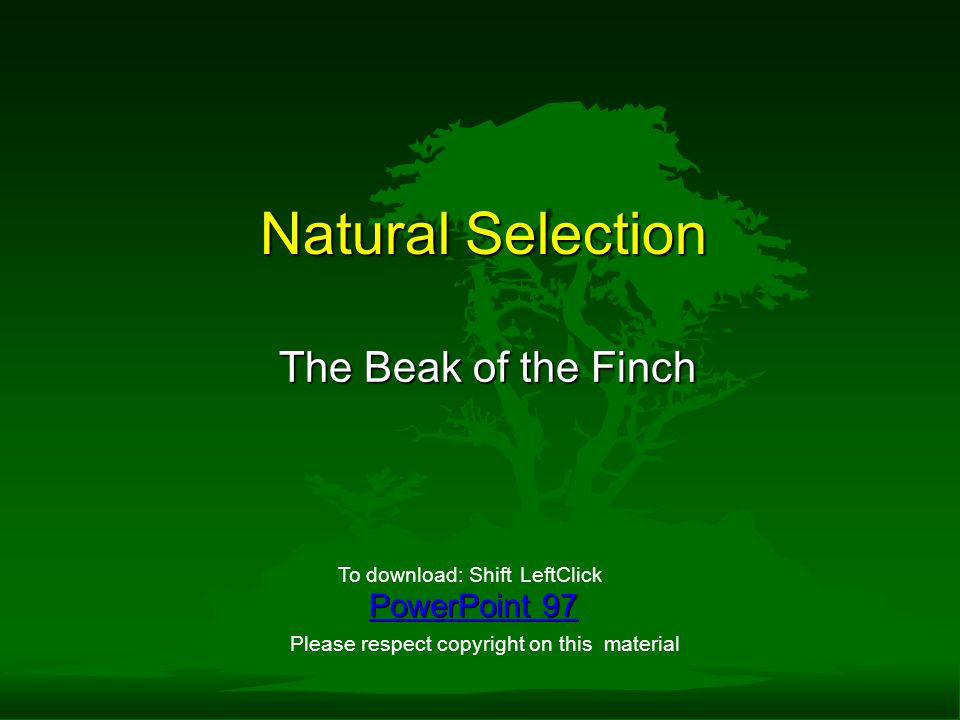 Natural Selection The Beak of the Finch PowerPoint 97 To download: ShiftLeftClick Please respect copyright on this material