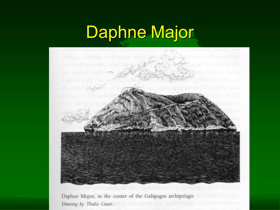 Daphne Major