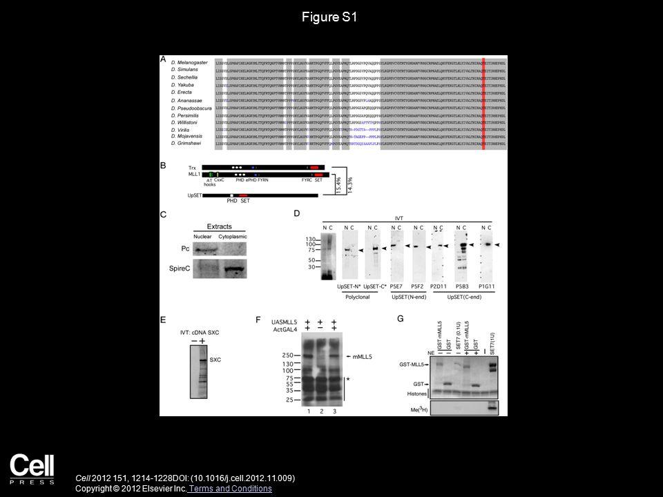 Figure S1 Cell 2012 151, 1214-1228DOI: (10.1016/j.cell.2012.11.009) Copyright © 2012 Elsevier Inc.