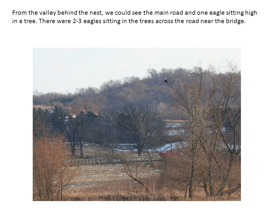 From the valley behind the nest, we could see the main road and one eagle sitting high in a tree.