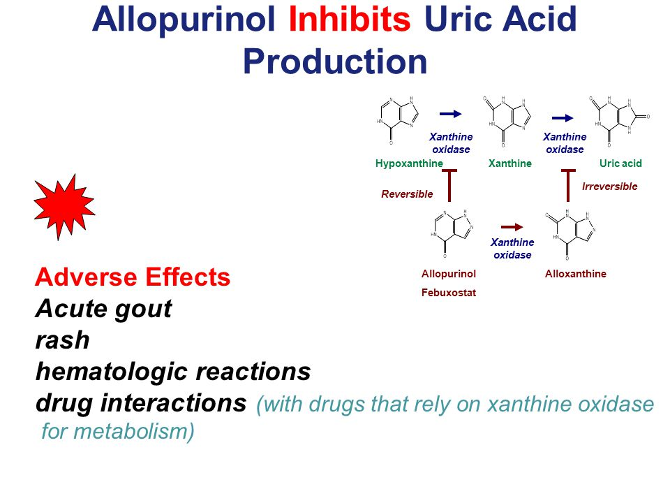 Allopurinol Inhibits Uric Acid Production Adverse Effects Acute gout rash hematologic reactions drug interactions (with drugs that rely on xanthine ox